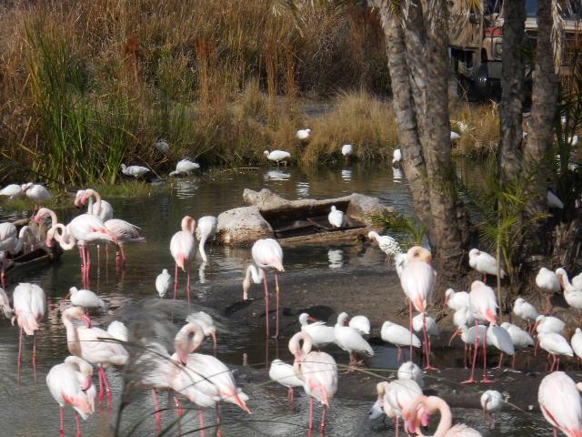 Event Bester Flamingos!