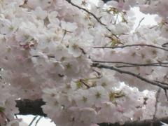 Blossmsclose